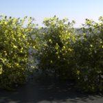 bushes render